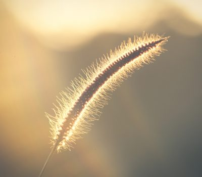weeds-nature-sky-light-beauty-close-up-1630530-pxhere.com